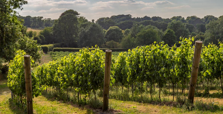 English Wine Week 2021